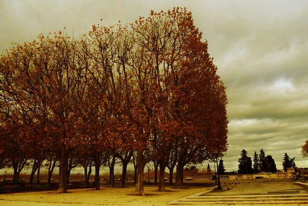 automne1_1